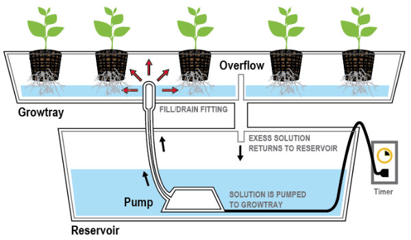2-ebb-and-flow-hydroponic-system