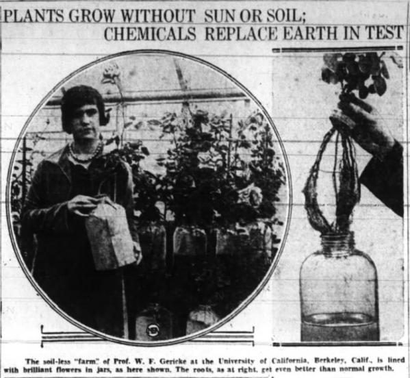 PlantsGrowWithoutSoilorSunAnnistonStarMay271928
