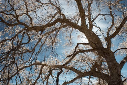 Oak-Sky-IR-1.jpg