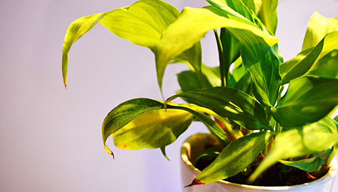 plante-interieure-lumiere.jpg