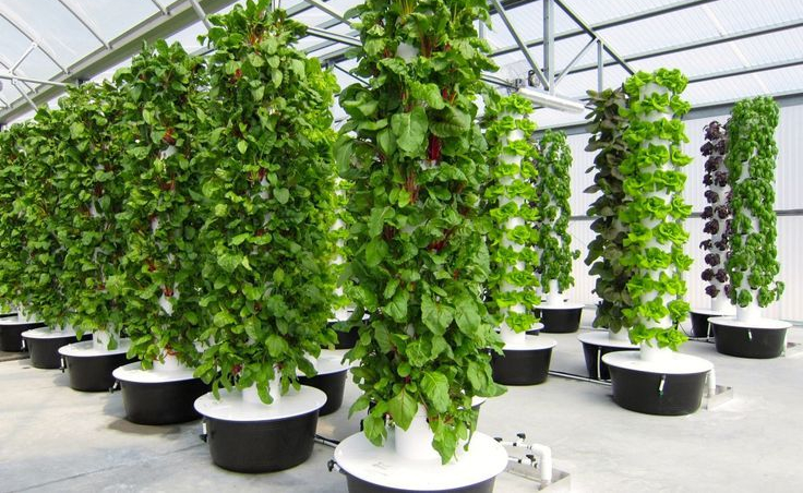 Tower Garden Systems, Whatu0027s The Deal?