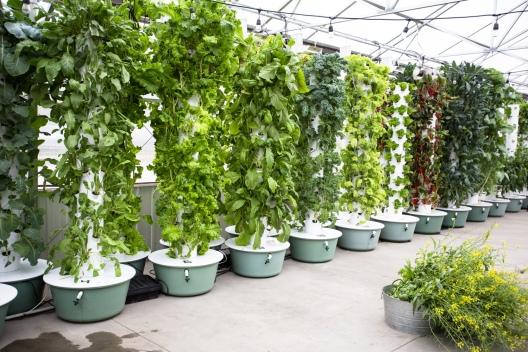 Tower-Gardens-Hamilton-Farms-Greenhouse